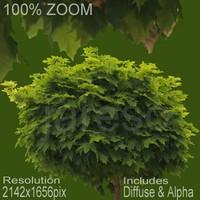 2142x1656 Tree Texture tree009.rar