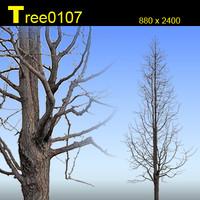 Tree0107.zip
