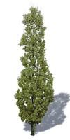 00 - [TREE] - arbre 001A