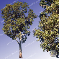 c3d_outback_tree_008.png