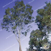 c3d_outback_tree_012.png