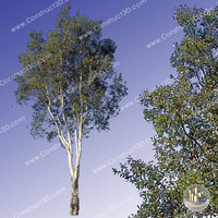 c3d_outback_tree_017.png