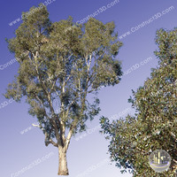 c3d_outback_tree_018.png