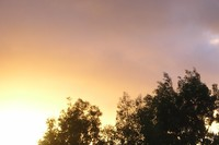 colourlighttree.jpg