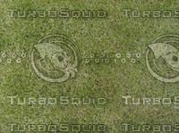 6 grass textures