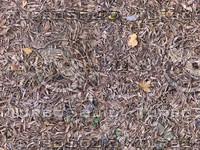 ground cover1_tiled.jpg