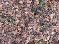 ground cover2_tiled.jpg