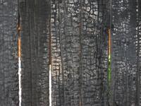 madera_quemada_3.JPG