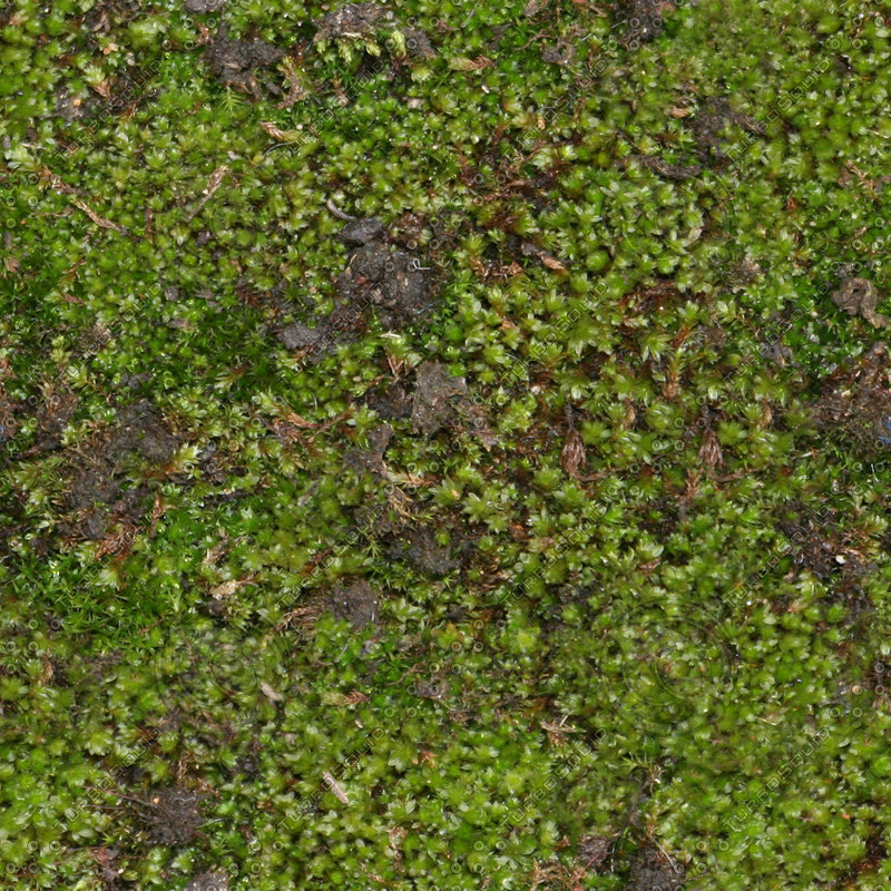 Texture Other moss game seamless