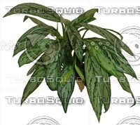 plant1.jpg
