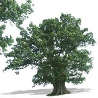 tree37