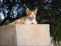 Red striped cat on stone wall