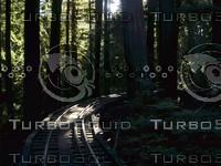 Roaring Camp Railroads - The NarrowGauge Tressle