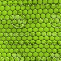 Green Scales.jpg