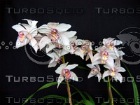 Orchid 1208.png