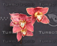 Orchid 1334 bronze 04-06.png