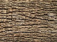 Palm_Tree_Texture_001.JPG