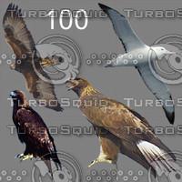 tex birds 100