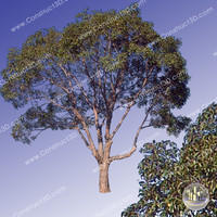 c3d_outback_tree_006.png