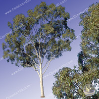 c3d_outback_tree_007.png
