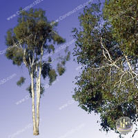 c3d_outback_tree_013.png