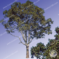 c3d_outback_tree_015.png