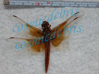 dragonfly_0273.JPG