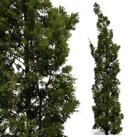 evergreen10