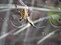 feild spider002.JPG