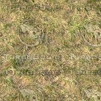 grass_001_1600x1200_tileable.jpg