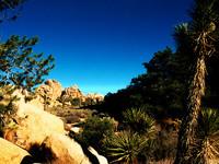 Mojave Photos 4