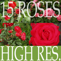Collection of 15 high res. roses Vol.1