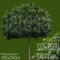 1962x2262 tree021.rar