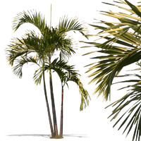 tropical31