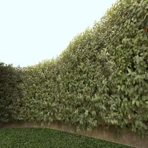 Oleaster - Elaeagnus angustifolia ------------ High Resolution