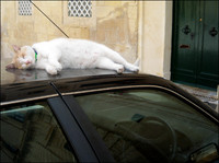 Cat asleep on roof of car