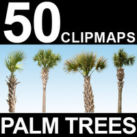 50 Palm Tree Textures