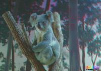 Koala3D.jpg