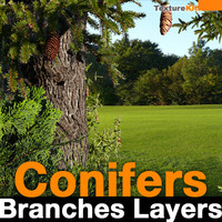 Conifers Branches Layers