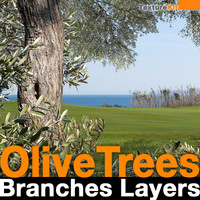 Olive Trees Branches Layers