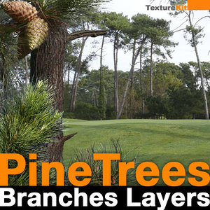Pine Trees Branches Layers