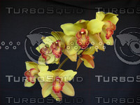 Orchids Gold 04 23 06.png