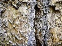 Hi-Res Bark Textures