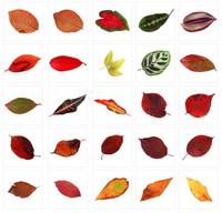 Leaf_Textures_25.rar
