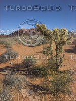 Valley-of-Fire_0389.png