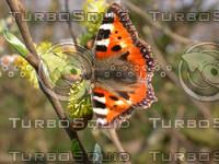butterfly2366.jpg