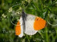 butterfly2748.jpg