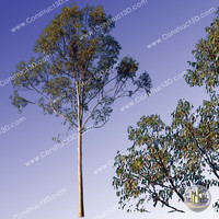 c3d_outback_tree_016.png
