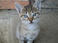 cat_photo_01.jpg