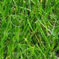 grass_003_3456x2304_tileable.jpg